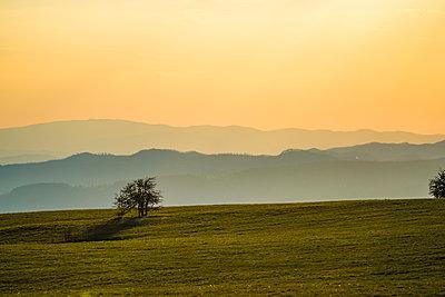 Italy, Marche, Petrano Mountain, single tree at sunset - p300m1469988 by Lorenzo Mattei