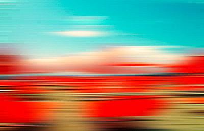 Dizzy - p6160049 by Thomas Eigel