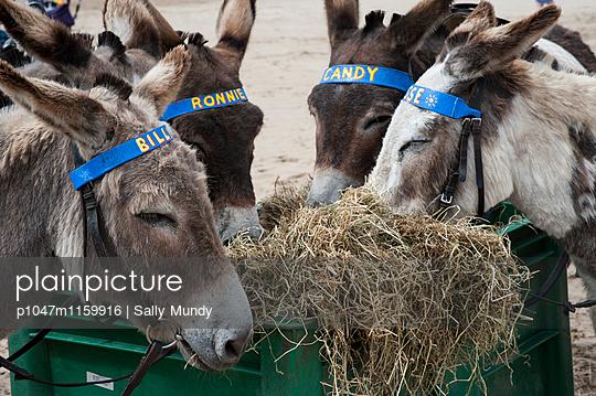 p1047m1159916 von Sally Mundy