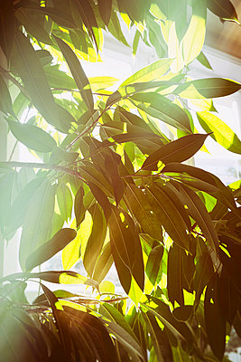 Houseplant in morning light - p1149m1162688 by Yvonne Röder
