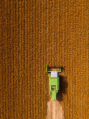 Aerial view of combine harvester on a field of soybean - p300m2189047 by oticki