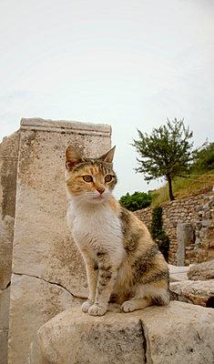 Cat in Ephesus - p382m858519 by Anna Matzen