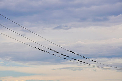 Birds on a wire - p876m710427 by ganguin