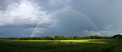 View of rainbow over lush field - p31228293f by Peter Rutherhagen