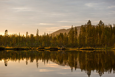 Forest reflecting in lake - p312m2051632 by Matilda Holmqvist