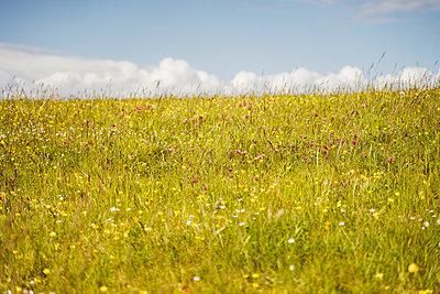 Bunte Blumenwiese - p432m2185548 von mia takahara