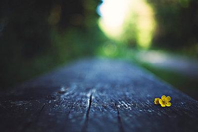 Tiny flower - p1002m740771 by christian plochacki