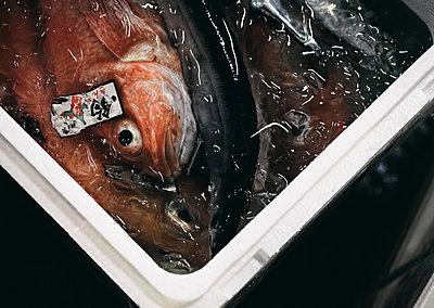 Frischer Fisch beim Tsukiji Fischmarkt - p1180m965876 von chillagano