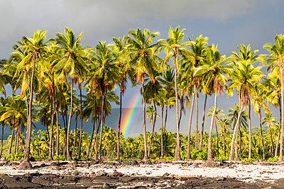 USA, Hawaii, Big Island, Pu'uhonua o Honaunau National Park - p300m2103534 by Fotofeeling