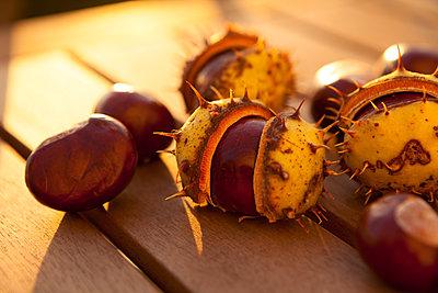 Horse chestnuts - p454m2052771 by Lubitz + Dorner