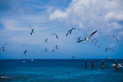 Möwen an der Küste - p045m2020806 von Jasmin Sander