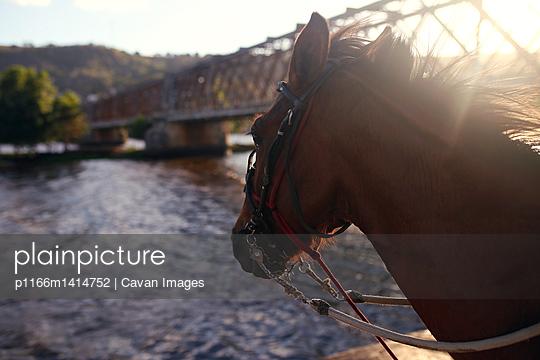 p1166m1414752 von Cavan Images
