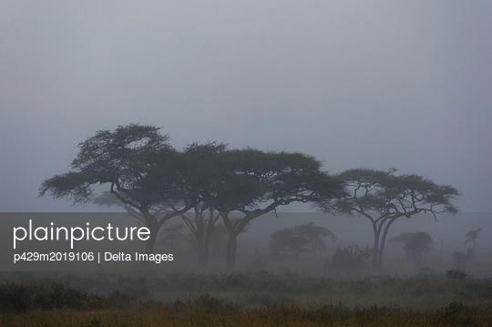 p429m2019106 von Delta Images