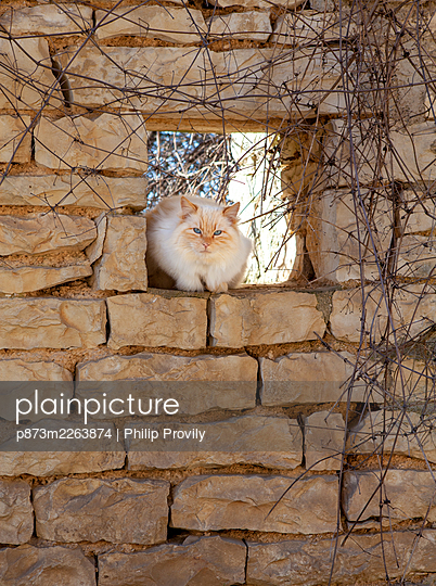 White Cat - p873m2263874 by Philip Provily