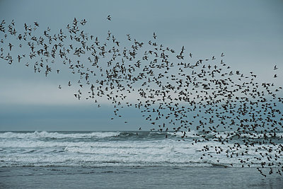 Flock of Birds Oregon Coast - p1262m1191165 by Maryanne Gobble