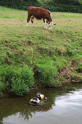 Kuh am Fluss mit Kindertraktor - p347m2055156 von Georg Kühn