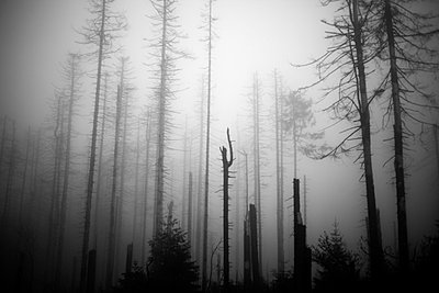 Foggy forest - p772m695042 by bellabellinsky