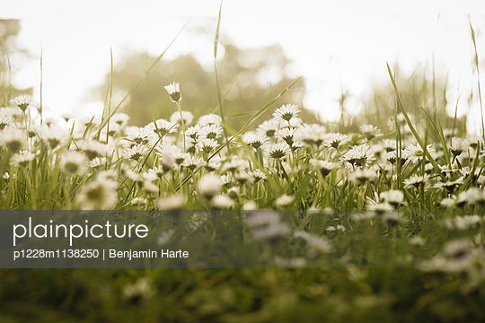 Summer field - p1228m1138250 by Benjamin Harte