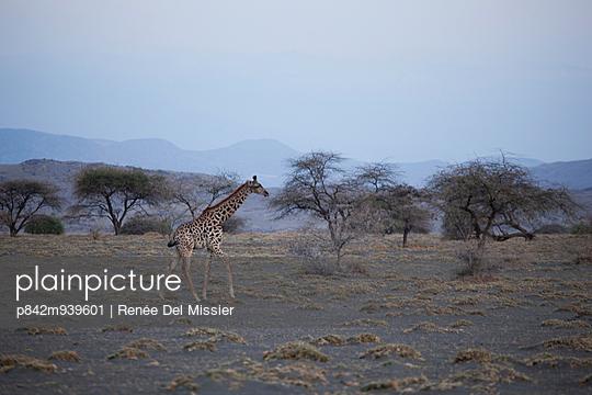 Little Giraffe - p842m939601 by Renée Del Missier