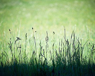 Wiesenblumen nebeneinander - p1312m1477651 von Axel Killian