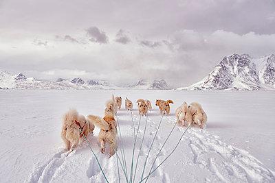 greenland, Schweizerland Alps, huskies - p300m1587643 von Alun Richardson