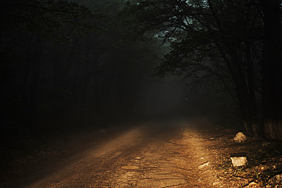 Dirt road in forest - p555m1504219 by Dmitry Ageev