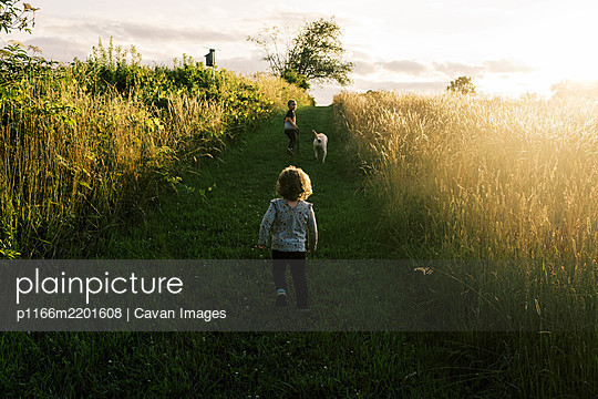 Two children taking their puppy on a summer evening walk in a field - p1166m2201608 by Cavan Images