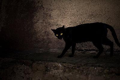 Black cat  - p1007m2092395 by Tilby Vattard