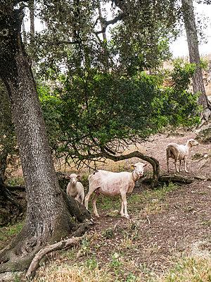 Mallorca - p1021m1574966 von MORA