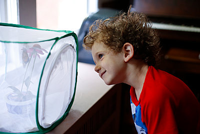 Young boy watching monarch butterflies emerge from a chrysalis - p1166m2153637 by Cavan Images
