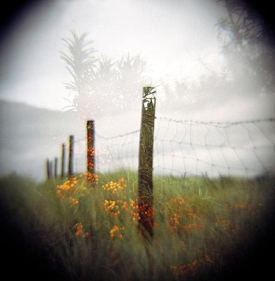 Zaun im Morgennebel - p5679752 von Christophe Boete