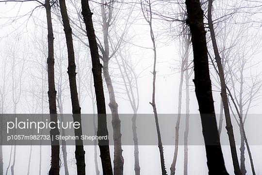 Nebel - p1057m982732 von Stephen Shepherd