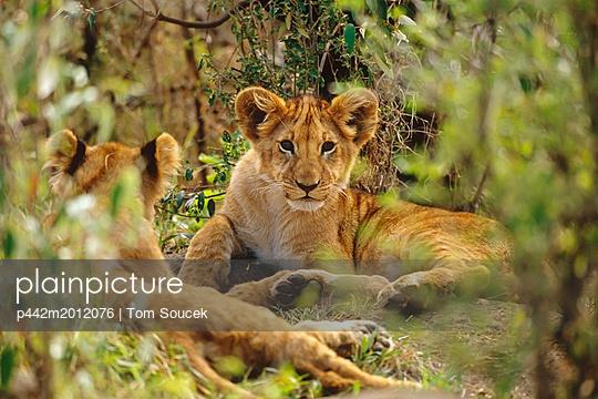 p442m2012076 von Tom Soucek