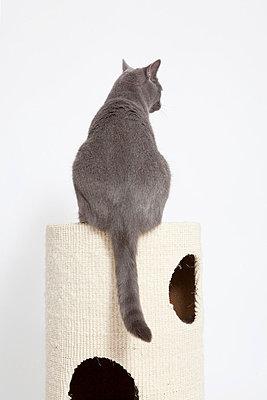 Grey cat - p7750146 by angela pfeiffer