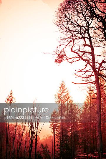 Forest - p1621m2231141 by Anke Doerschlen