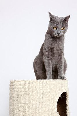 Grey cat - p7750147 by angela pfeiffer
