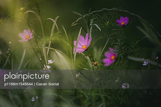 p1166m1545644 von Cavan Social