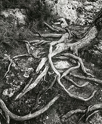Tree - p8850275 by Oliver Brenneisen