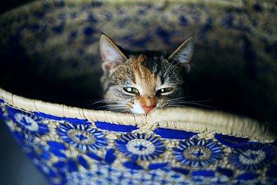 Tigrou aime le Maroc - p987m2221973 by Célia Swaenepoel