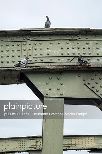 Tauben auf einer Brücke - p229m2021771 von Martin Langer