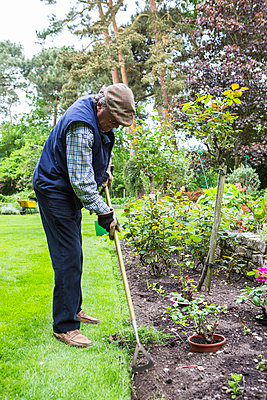 Senior man removing weeds in garden - p1026m1164181 by Patrick Frost