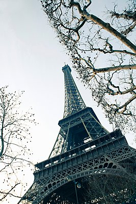 Bare trees and Eiffel Tower - p429m1148940 by Tim E White