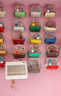 Bird cages - p045m934768 by Jasmin Sander