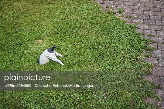 Animal figurine in the garden - p229m2294956 by Martin Langer