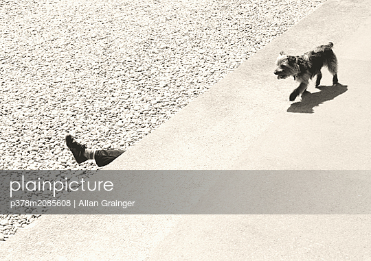 Dog and Foot - p378m2085608 by Allan Grainger