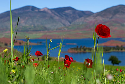 Poppies - p046m959182 by Hexx