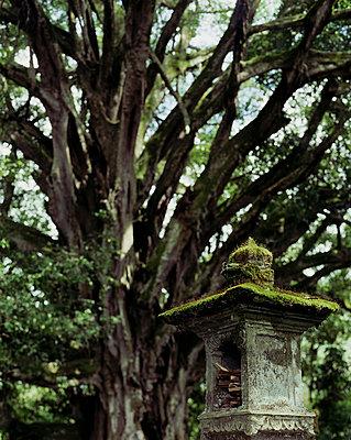 Bali - p1016m792551 von Jochen Knobloch
