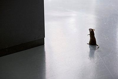 Mäuschen - p7510020 von Dieter Schwer