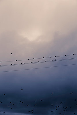 Birds on a wire - p248m778468 by BY