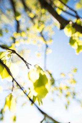 Frühling - p954m1136851 von Heidi Mayer